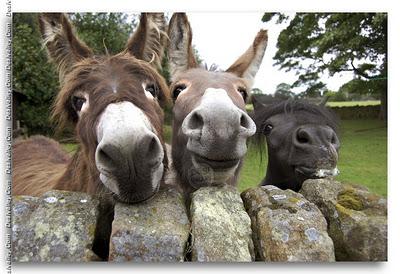 burros+graciosos+fotos3