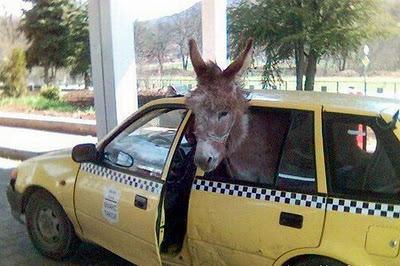 burros+graciosos+imagenes2
