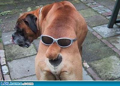 foto+de+perro+gracioso21
