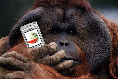 Animales+divertidos+usando+celulares+moviles2