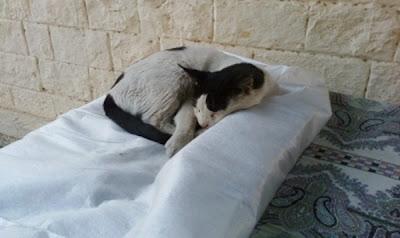 gato+durmiendo+en+horas+de+trabajo2