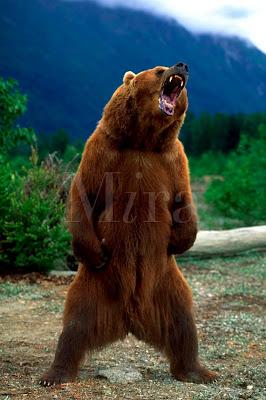 oso+de+pie+enojado+bravo+ososo21