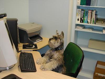perro+en+la+computadora3