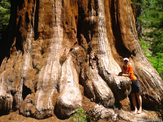 base-de-sequoia-gigante2