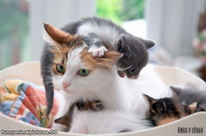 Fotos de gatitos lindos