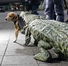disfraz+para+perros3
