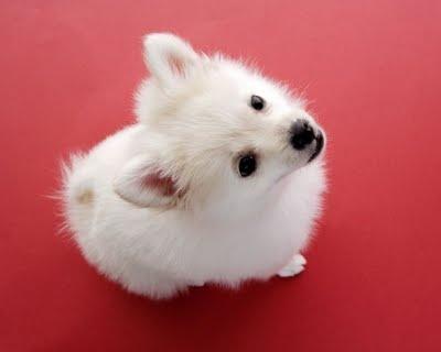 perros+lindos31