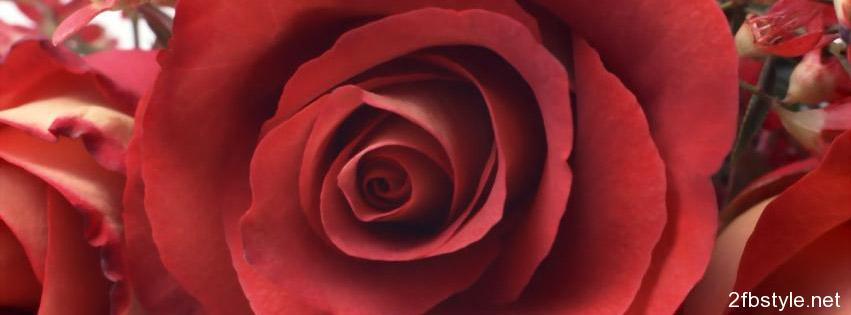 Portada para Facebook de Rosa Roja