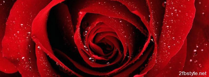 Portada para facebook de Red Roses