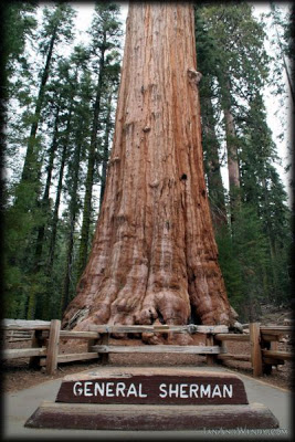 SequoiaKingsCanyon-7-General-Sherman