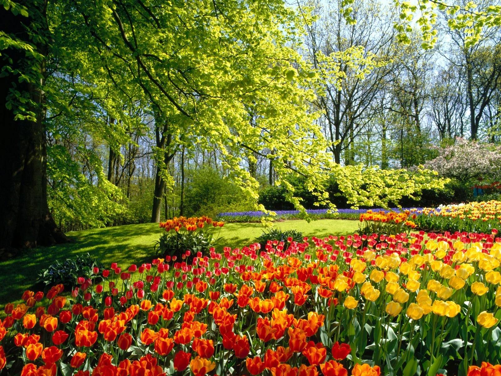 Fotos de jardines hermosos descargar im genes gratis - Cosas para el jardin ...