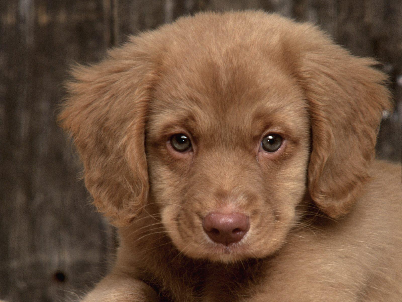 Fotos de perros tiernos 2