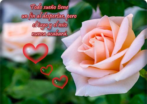 Imágenes De Rosas Hermosas Con Dedicatoria