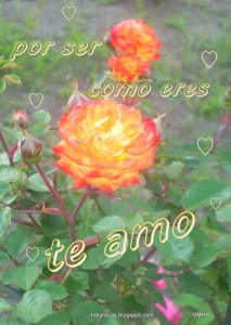 17-oct amor.rosas.flores frases