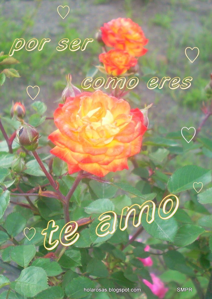 Lujo Fotos De Flores Con Frases De Amor Mejor Casa Sobre Frases De