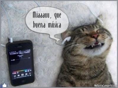 gato-musica-403x303