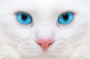 gato1-300x199