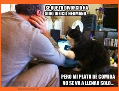 imagenes-chistosas-para-compartir-gato-hambriento