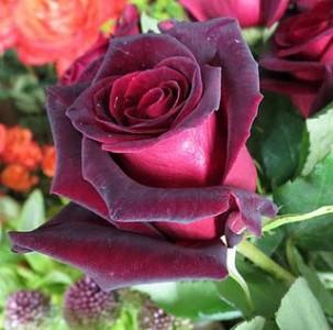 Imagen de una rosa roja