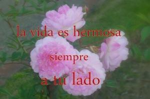 22+oct-amor+rosas+frases