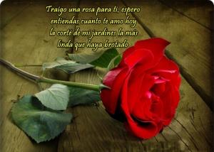 imagenes-de-rosas-rojas-con-frases-de-amor-postales-de-rosas-para-el-amor-enviar-en-facebook