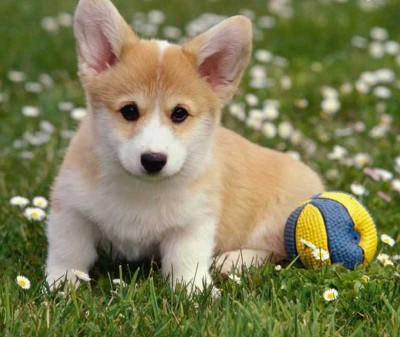 perro firefox
