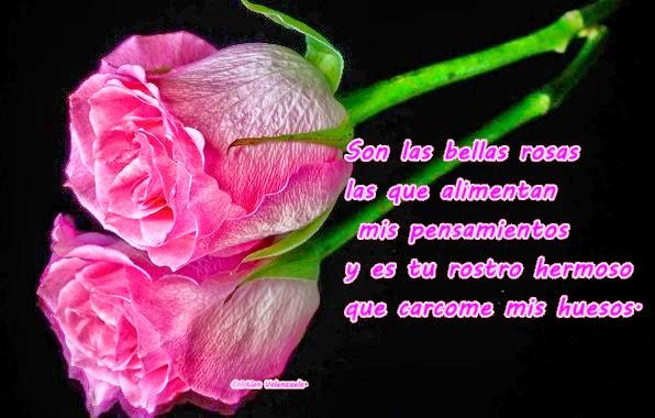 Imàgenes Con Frases De Esta Rosa Espara Ti Descargar Imágenes Gratis