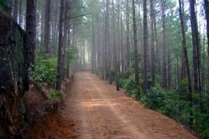 Bosque El Imposible,El Salvador