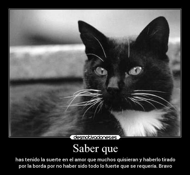 Imágenes De Gatos Con Frases De Amor Descargar Imágenes Gratis