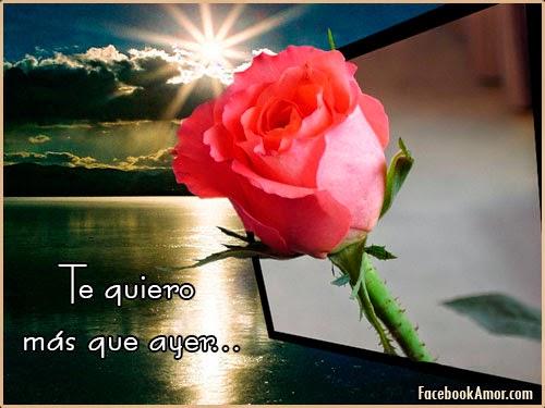 Imagenes De Rosas Con Frases Bonitas Descargar Imagenes Gratis